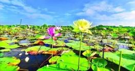 বিশ্বের প্রথম হলুদ পদ্ম বাংলাদেশে