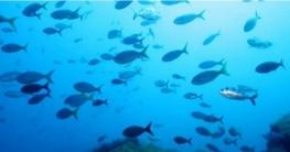 নতুন প্রজাতির মাছ 'বাংলাদেশিয়াস' বৈশ্বিক তালিকায় অন্তর্ভুক্ত