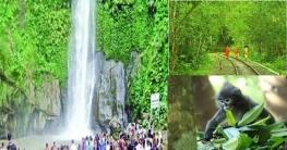 রোববার থেকে পর্যটকদের জন্য খুলছে মাধবকুণ্ড-লাউয়াছড়া